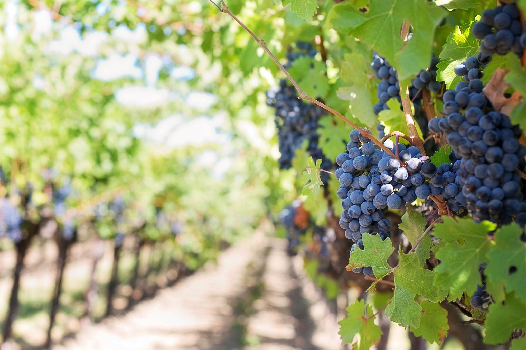 Vignoble à vendre italie, propriétés viticoles vente, Sotheby's Italy - sothebys.photo 1